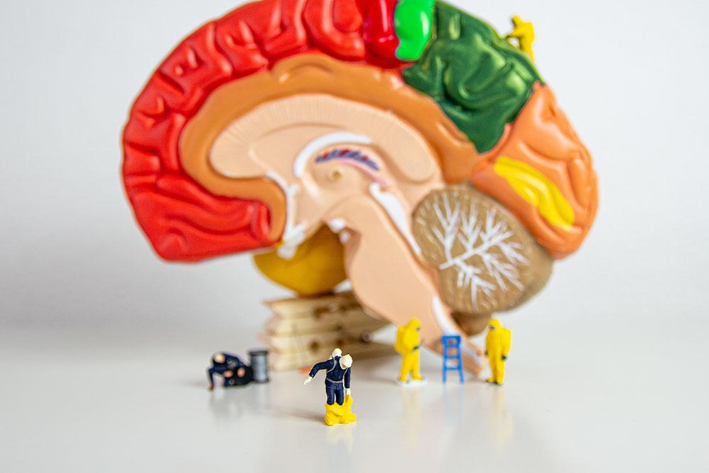 2 Wege deines Gehirns bei Gefahr